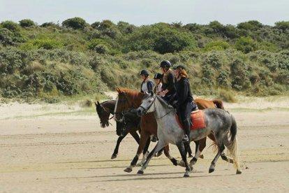 Heb jij al veel ervaring met paardrijden en is het je droom om eens een rit op het strand te maken? Dan is deze strandrit voor gevorderden een echte aanrader!