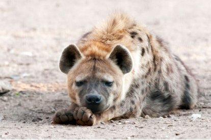 Kom naar Volkel en ontdek Dierenpark Zie-ZOO, een zorgdierentuin die mede wordt gerund door mensen met autisme. Dierenpark Zie-ZOOhuisvest een groot aantal speciale dieren die je in andere dierentuinen niet snel zult tegenkomen, zoals de zwarte Amerikaanse beer en anaconda's!