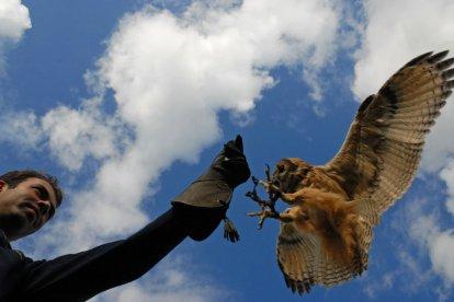 In een geweldige sfeer leer je tijdens een unieke roofvogel-workshop om te gaan met verschillende soorten roofvogels en uilen. Maak kennis met de technieken en voor je het weet heb je een roofvogel op je eigen handschoen.
