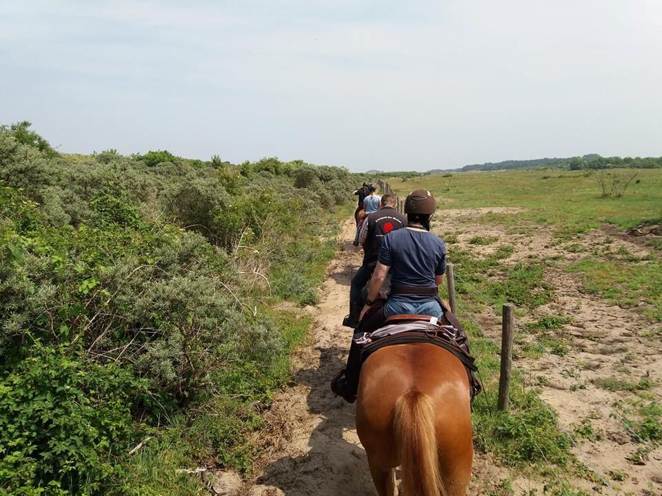 Dagje paardrijden inclusief lunch! | Cadeaubon